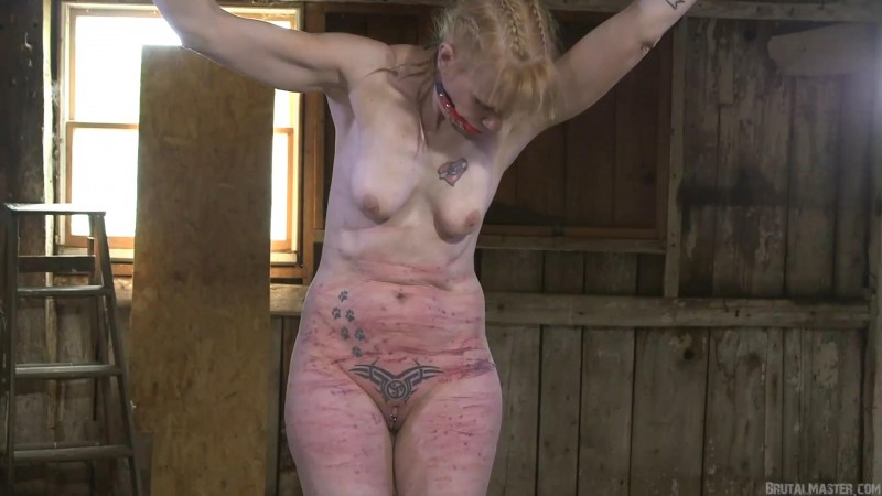 Whipped Agony – The Pig. 02 Apr 2019. BrutalMaster.com (234 Mb)