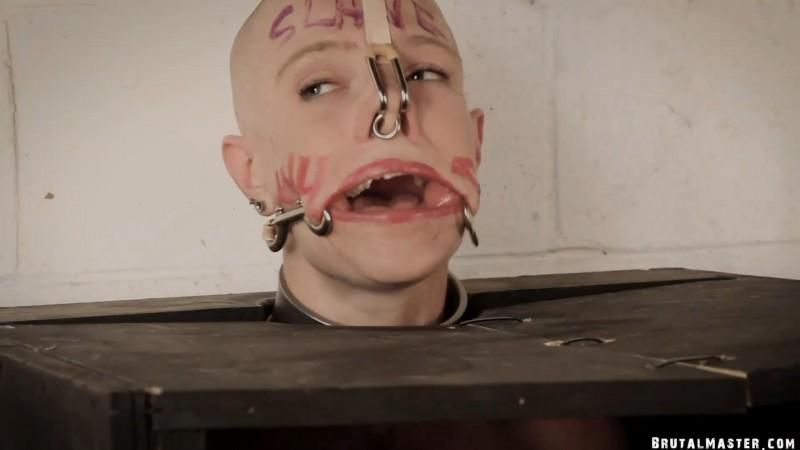 The Humiliation Box – Greyhound. 02 Aug 2019. BrutalMaster.com (609 Mb)