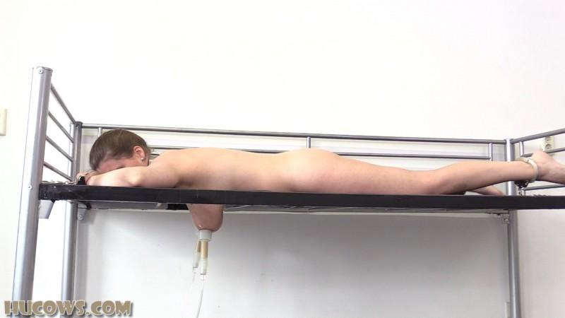 Lady Lyne – on the milking bed (hu348). 28 Aug 2021. Hucows.com (1000 Mb)